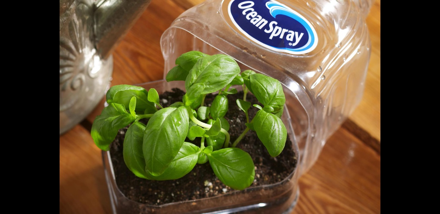 Ocean Spray Seed Starter Kit